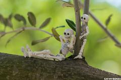 Mounette's garden (EatMyBones) Tags: fgurine garden miniature nature poseskeleton rement skeleton toy toyphotography tree