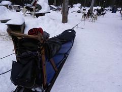 Raring to go (lmundy2002) Tags: dogs dogsled dogsledding huskies sleds whitefish olney whitefishmt olneymt montana mt winter wintersports