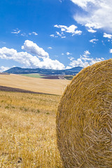 Work and pray, live on hay, you'll get pie in the sky when you die. Joe Hill (serena zambelli) Tags: hay fieno fields campi valdorcia tuscany landscape
