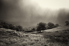 A Walk In The Clouds (Ian Smith (Studio72)) Tags: rx100 sonyrx100 sony uk england cumbria lakedistrict ambleside mountains countryside sepia landscape trees hills clouds rain raining rainy mist weather studio72