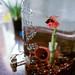 170508-betta-fish-ice-tea-tank.jpg