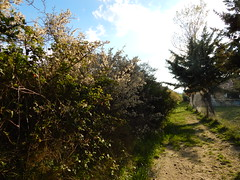 wandering around in the afternoon (amgirl) Tags: spain 2017 navarra puentalareina march31 day2 evening
