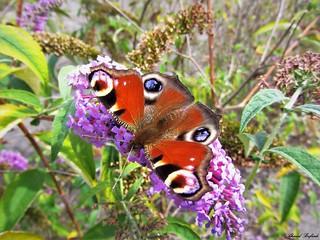 Butterfly 1248