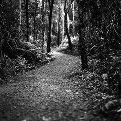 Still your passenger (spannerino) Tags: path forest newzealand bronicasqa low black white vintage filmlives handprocessed square scanned dof blackandwhite monochrome analogue analog canon9000f film mediumformat pov vintagecamera viewpoint waistlevelviewfinder 6x6 120mm outdoor zenzabronicasqa 80mm analoguephotography aristaultra