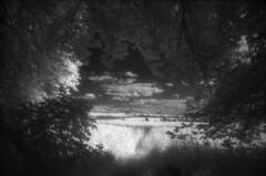 Ausblick in die Realität (the future is analog) Tags: analog film bw infrared infrarot efke ir820 aph09 trees tree forest wald woods süntelbuche süntelbuchen dwarf beech fagus sylvatica suentelensis