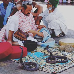 Snake charmer and wranglers Place Jemaa el-Fna, Medina, Marrakech (Cozy61) Tags: instagramapp square squareformat iphoneography uploaded:by=instagram gingham •marrakech morocco travelphotography travel cobra snakes fujifilm xpro1 culture souk cafedespices justgoshoot snakecharmer photooftheday day1 x100 fujifilmxseries local koutoubiamosque place jemaaelfna el jadid medina market mosquée koutoubia