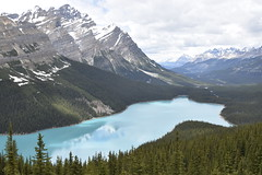 Peyto Lake (tdmcginley) Tags: peyto lake