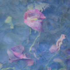 120/365 (Jane Simmonds) Tags: nature pond lake water waterlily abstract impressionistic 120365 3652017
