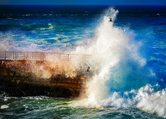 Power of the Ocean (danielledufour430) Tags: ocean sea water splash wave crash spray seagulls birds fly wall seawall colorful landscape seascape blue california sandiego lajolla sonya6000 nature
