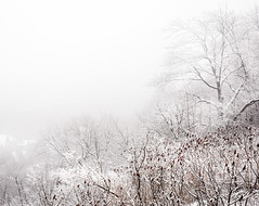Montreal - Mont Royal under a snow storm (nicolaspika) Tags: amazing canada holiday landscape landscapephotography montreal montroyal nature olympus photosergereview snow snowing storm travel traveller travelphotography trees trip vacation winter montréal québec ca