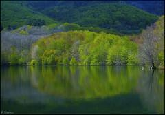 Reflejos de primavera. (antoniocamero21) Tags: pantano color foto sony reflejos bosque hayas verde árboles montseny natural espai barcelona catalunya primavera