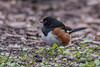 untitled-6786 (bobclark330) Tags: easterntowhee lakepark
