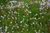Dandelions and alfalfa (walmarc04) Tags: puf papadii lucerna dandelion fluff garden