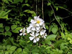 2222 (cleotalk) Tags: jessamine county ky kentucky gorge trail creek overstreet deer woods hiking