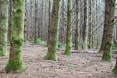 Mysterious Geometry (Keith Midson) Tags: forest plantation tree trees tasmania