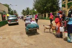 "I just followed all the sheep and this guy carrying my green backpack (which it's getting too heavy for me after so many presents from my friends in every African country I visit) and I ended up in a ferry from Barra to Banjul.  Welcome to The Gambia • <a style=""font-size:0.8em;"" href=""http://www.flickr.com/photos/147943715@N05/33783344533/"" target=""_blank"">View on Flickr</a>"