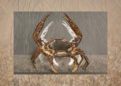 Natures Tapestry - Portfolio #3 (Perfectoarts) Tags: portfolio naturestapestry ingriddouglas perfectoarts creativeedit crabs beach pebbles