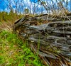 Old fallen tribe (MidnightRunner96) Tags: nature natural wood old fallen tree nikon d5200cloud tatras high tatry vysoké slovensko slovakia wide vertorama panorama