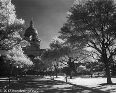 TexasCapitolbw_infrared-672 (Explored) (wanderingYew2 (thanks for 3M+ views!)) Tags: 120 6x9 austin austintx austintexas capitol fuji6x9 fujigw690 r72filter texas texasstatecapitol blackandwhite film filmscan infrared infraredfilm mediumformat