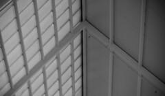 techo (ebsigma) Tags: parquedelasciencias granada animales mariposa falcon halcón comer parpado color azul butterfly comiendo flor naranja flower insecto palo stik mirada ojo larva pole buho españa