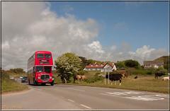 (14) AEC Regent V - GWN 867E (Crowbuster) Tags: swansea bus museum heritage preservation nolstalgic southgate pennard bullock cow bovine cattle double decker aec regent v abertawe gower wales cymru transport london