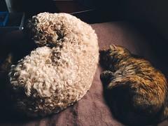 Sleepy sleepers (Markus Jaaske) Tags: cat dog animal sleep love rest together sleeping tired mammal resting sleepyhead no person