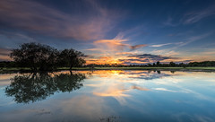 Janesmoor Sunset (nicklucas2) Tags: janesmoor pond newforest nature reflection water sun sunset flare tree grass cloud landscape