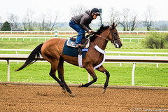 Gliding (Casey Laughter Media) Tags: racehorse horseracing thoroughbred gallop horse horses keeneland racing racetrack lexington kentucky