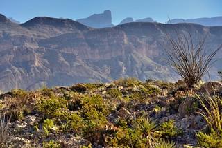 Mountainside After Mountainside Until Pico de Cerda (Big Bend National Park)
