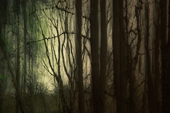 * (sedregh (off for some days)) Tags: tree trees bäume multipleexposure multiple icm intentionalcameramovement wald woods forest painterly