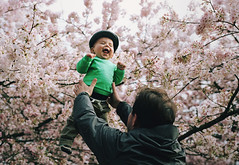 henry through the seasons: spring, part one (manyfires) Tags: film analog henry boy toddler baby son love family child portrait peoplescape nikonf100 35mm spring blossom bloom pnw pacificnorthwest oregon michael father cherrytrees cherrytree sakura downtown pdx portland waterfrontpark branches pink laughing happy