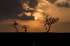 Texas Horizons (Explored) (santosh_shanmuga) Tags: texas bexar san antonio sanantonio horizons horizon landscape vista scenic scenery plain plains tree sun sunset sunrise orange golden light silhouette outdoor outdoors nature sky nikon d810 105mm explore explored