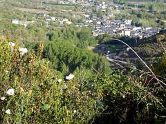 Molinaseca (amgirl) Tags: elbierzo morning spain 2017 riegodeambostomolinaseca molinaseca village rockrose viewpoint trees road april19 day21 caminofrances caminodesantiago descent descend
