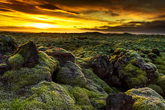 Sunrise at Eldhraun Lava Fields (jeanineleech) Tags: eldhraunlavafields iceland mosscoveredlava sunrise volcano