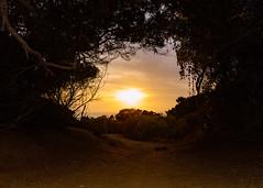 (ELMUNDOPORMISOJOS) Tags: nikond600 fullframe sandiego oceanbeach sunset trail hiking ocean