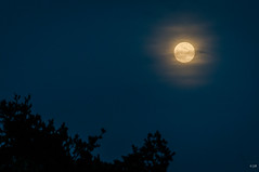 Lune (1 sur 1) (jeromiko88) Tags: lune moon light moonlight nocturne ambiance lumière night photography arbre tree landscape paysage vosges france europe world flickr amazing blue yellow bleu jaune jb
