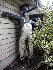 That Stick Has to Hurt (Steve Taylor (Photography)) Tags: scarecrow stick bibandbraces hat face shirt hose bush pipe downpipe straw building weatherboard blue green white man newzealand nz southisland canterbury christchurch cbd city hagleypark