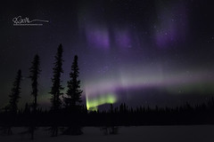 _64A1808 (Ed Boudreau) Tags: alaska northernlights auroraborealis nightphotography nightsky stars aurora winter winterscene winterscape landscape alaskalandscape landscapephotography auroratrapperscreek petersvillerd auroracolors