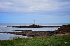 DSC_0168 (prettyredglasses.com) Tags: seatonsluice beach englishcoast northeastengland seaside nature exploreearth lighthouse stmaryslighthouse seasideview
