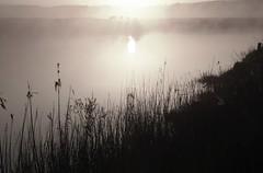 An der Alten Treene-Schleife in Süderhöft - Rindssilhoutten am Bergenhusener Ufer; Nordfriesland (25) (Chironius) Tags: morgendämmerung sonnenaufgang morgengrauen утро morgen morning dawn sunrise matin aube mattina alba ochtend dageraad zonsopgang рассвет восходсолнца amanecer morgens dämmerung himmel sky ciel cielo hemel небо gökyüzü spiegelung refleksion reflection réflexion riflessione отражение reflexión yansıma wolken clouds wolke nube nuvole nuage облака gegenlicht süderhöft nordfriesland schleswigholstein deutschland germany allemagne alemania germania германия szlezwigholsztyn niemcy wasser wasserspiegel treene fluss river rivière rio поток fiume stream nebel fog brouillard niebla tier rind