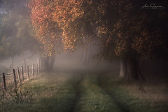 Misty Autumn (artursomerset) Tags: autumn trees countryside langport colours fog path wood england