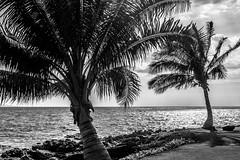 DSC03968.jpg (jaғar ѕнaмeeм) Tags: kihei hawaii unitedstates us wailea maui marriott luau