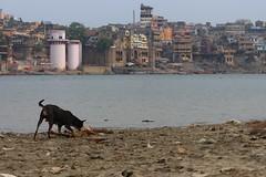 IMG_6205 (anthrax013) Tags: india varanasi corpse dead death bones skull flesh decomposition rot decay necro necrophilia