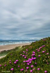 Spring at the shore (Photosuze) Tags: pointreyes ocean pacificocean california nationalseashore flowers clouds sand water surf spring hills landscape