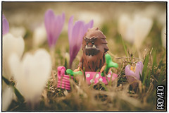 Picking medicinal herbs (Priovit70) Tags: lego minifigures bigfoot themcfoots spring mountains crocus herbs olympuspenepl7