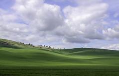 palouseIMG_8045 (campviola) Tags: palouse spring wheat wheatfields cloudscape blueskywithclouds beautifulclouds green