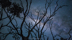 """""""We all travel the Milky way together, trees and men"""" (nightscapades) Tags: agarslane astronomy astrophotography autopanopro berry dust galacticcore gas illawarra kiama milkyway night nightscapes nowra pano panorama panos shadows shoalhaven silhouette sky stars stitch trees"""