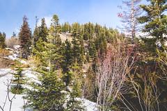 One last look (johnwporter) Tags: hiking scramble cascades northcascasdes mountains nationalforest wenatcheenationalforest wenatcheemountains roughhousemountain 徒步 爬行 喀斯喀特山脈 北喀斯喀特山脈 山 國家森林 韋納奇國家森林 韋納奇山脈 毆鬥山 atx116prodx tokinaaf1116mmf28 wideangle wideanglelens 廣角 廣角鏡