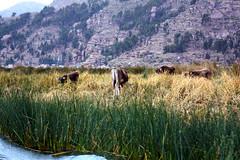 Uros (fishwasher) Tags: uros lago titicaca lake puno peru andes december 2010
