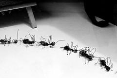 Karıncalar - Ants (halukderinöz) Tags: karınca ant art sanat zagreb croatia hırvatistan canoneos40d eos40d hd